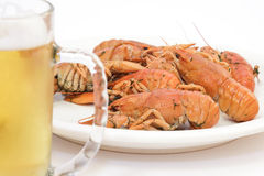 Crayfish stock images