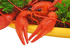 Crayfish. Boiled crayfishes on a dish with parsley and dill Stock Image