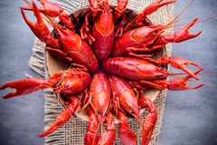 crayfish obrazy royalty free