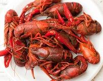 crayfish Zdjęcie Stock