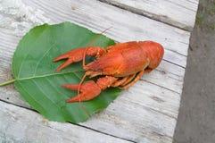 Crayfish Стоковая Фотография RF