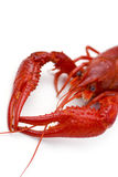 crayfish fotografia stock