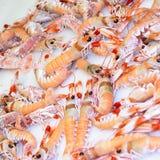 Crayfish. Fresh crayfish in a market Stock Image