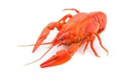 crayfish Zdjęcia Royalty Free
