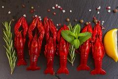 crayfish Стоковые Изображения RF