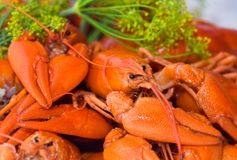 Crayfish Stock Photos