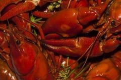 crayfish Стоковое Фото
