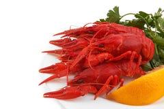 crayfish Стоковое Изображение