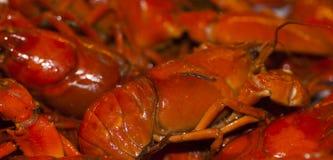 crayfish Стоковые Фотографии RF