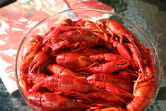 crayfish Obrazy Royalty Free
