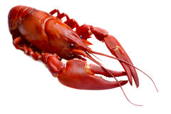 Crayfish against white Stock Image