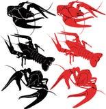 Crayfish animals. Vector isolated fauna Stock Photo