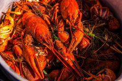 Crayfish for beer, boiled crustaceans, crayfish, beer snacks, go Royalty Free Stock Image