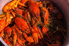 Crayfish for beer Royalty Free Stock Image