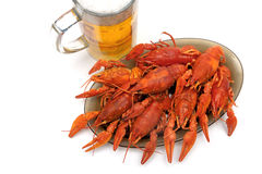 Crayfish and beer closeup on a white background. Horizontal photo Royalty Free Stock Image