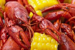 Crayfish Boil. Close-up of Crayfish Boil. Shallow DOF royalty free stock photo