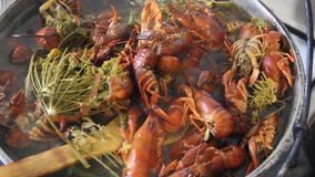 Crayfish boil in a pot. Cooking crayfish with dill and salt stock footage