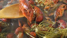 Crayfish boil in a pot. Cooking crayfish with dill and salt stock video footage