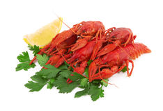 Crayfish Stock Images