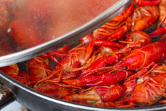 Crayfish in boiling water in the pot Stock Photos