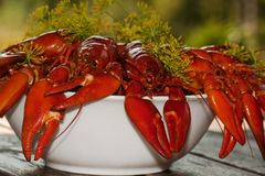 Crayfish in a bowl. Boiled and red crayfish in a bowl Stock Photo
