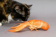 Crayfish and cat Royalty Free Stock Images