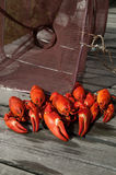 Crayfish catch. Red fresh crayfish in front of a fishing cage Royalty Free Stock Images