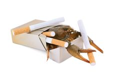 Crayfish and cigarette as cancer symbol. Isolated on white stock images