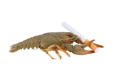 Crayfish and cigarette as cancer symbol. Isolated on white stock photography