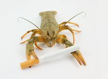 Crayfish and cigarette as cancer symbol. On grey background stock images