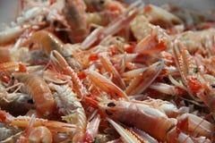 Crayfish in close up Stock Photos