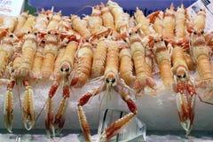 Fresh Mediterranean Crayfish stock photos