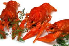 Crayfish closeup. Closeup crayfish, russian delicacy for beer Royalty Free Stock Image