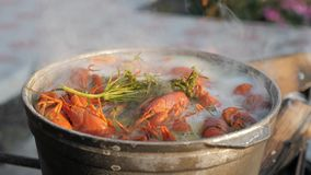 Crayfish cook in water with spices and herbs. Hot Boiled Crawfish. Lobster closeup. Crayfish cook in water with spices and herbs. Hot Boiled Crawfish. Lobster stock video footage