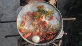 Crayfish cook in water with spices and herbs. Hot Boiled Crawfish. Lobster closeup. Top view. Crayfish cook in water with spices and herbs. Hot Boiled Crawfish stock footage