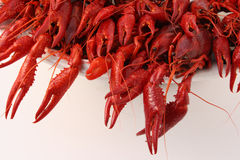 Crayfish cooked Royalty Free Stock Images