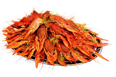 Crayfish cooked in dill arranged on a tray Stock Photos