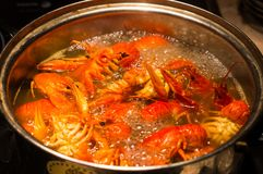 Crayfish are cooked in a pot.  stock images