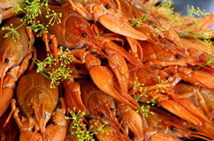 Crayfish Cooked With Dill Stock Photos