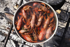 Crayfish cooking. Top view into a big pot cooking crayfish on a fire outdoors Stock Photo