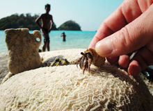 Crayfish and corals not far from Ko Chang island Royalty Free Stock Photo
