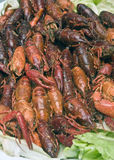 Crayfish crawfish. Crawdads river,water Royalty Free Stock Images