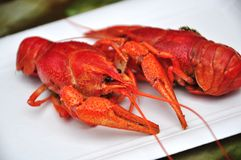 Crayfish delicacy Royalty Free Stock Photo