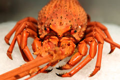 Crayfish - details Stock Photo