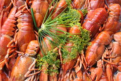 Crayfish and dill. A lot of crayfish laying together Royalty Free Stock Image