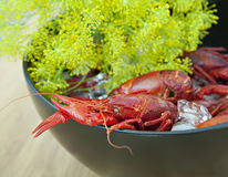 Crayfish and dill Royalty Free Stock Photography