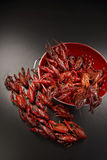 Crayfish. Royalty Free Stock Photography