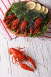 Crayfish with fresh herbs close-up. vertical top view Royalty Free Stock Photography