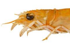 crayfish głowa zdjęcie stock