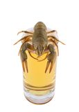 Crayfish on glass of beer Royalty Free Stock Photos